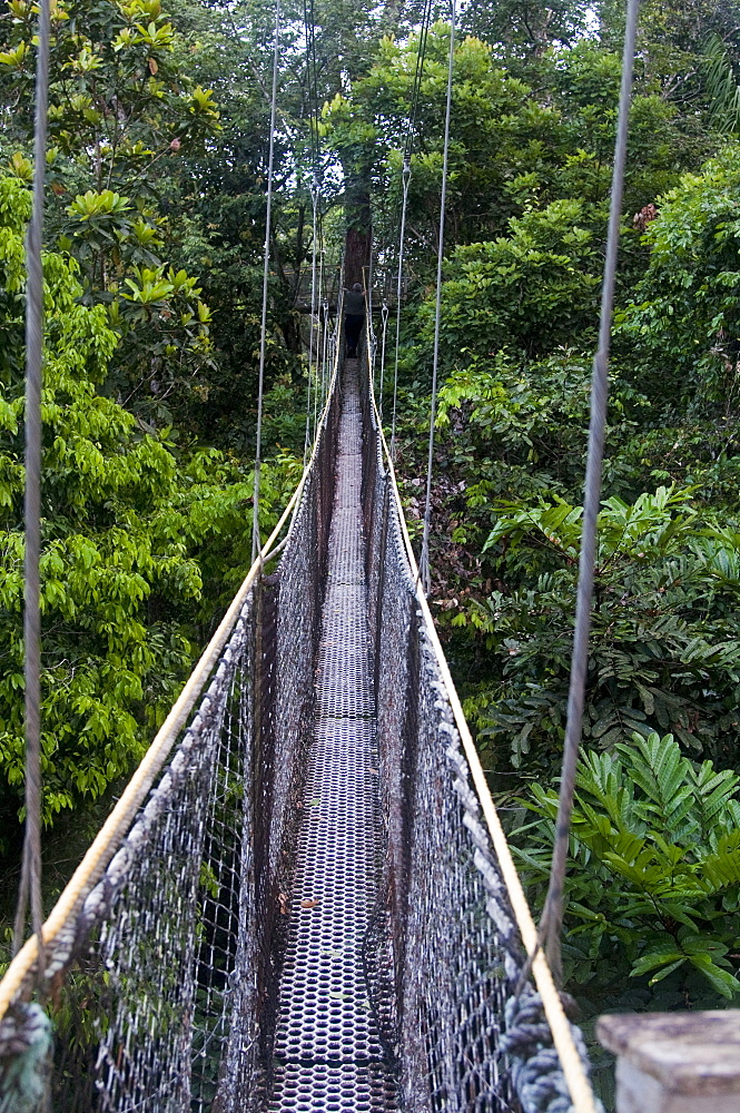 Canopy walkway at Atta Rainforest Lodge near Iwokrama, Guyana, South America