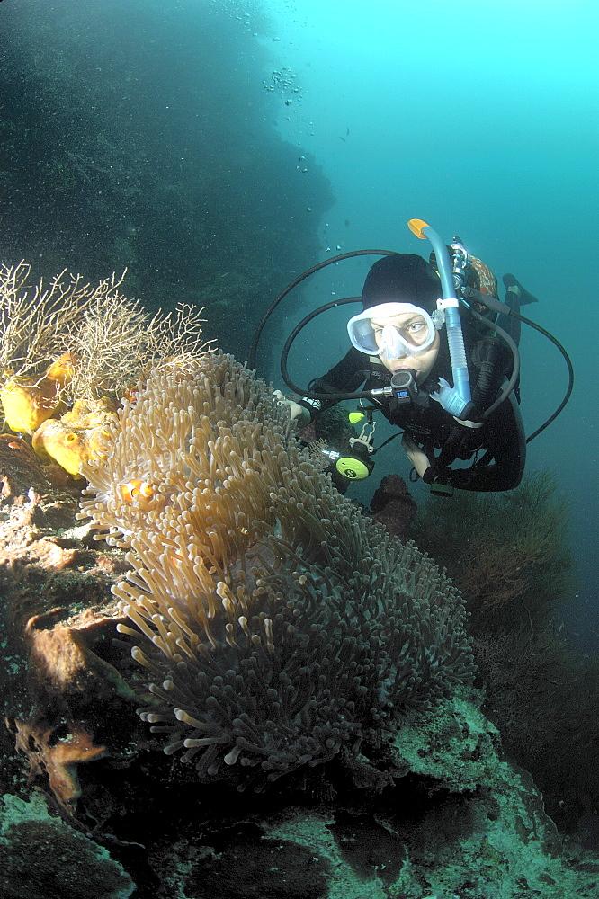 Diver and anenome/clownfish.  Borneo, Malaysia   (RR) - 973-63