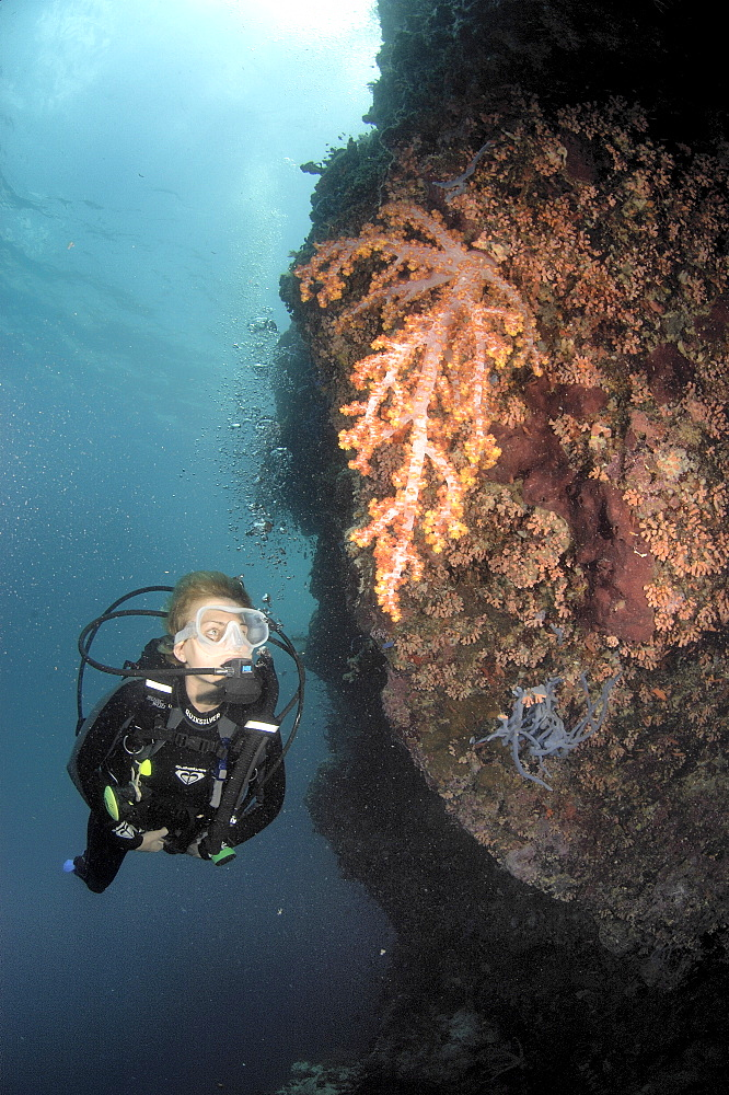 Diver on wall with soft coral.  Borneo, Malaysia   (RR)