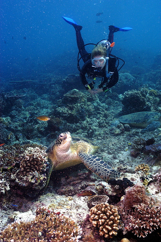 Diver with Turtle.  Malaysia   (RR)