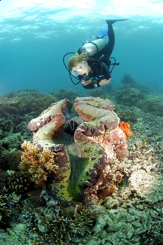 Diver and Giant Clam (Tridacna sp).  Malaysia   (RR)