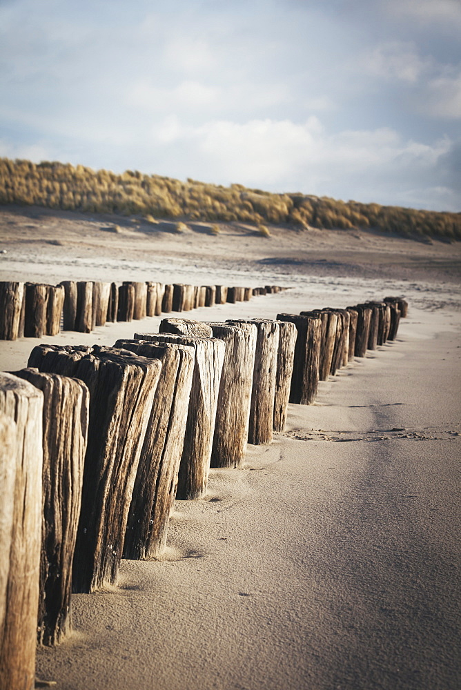 Wooden groynes on a sandy beach, leading to sand dunes, Domburg, Zeeland, The Netherlands, Europe  - 974-370