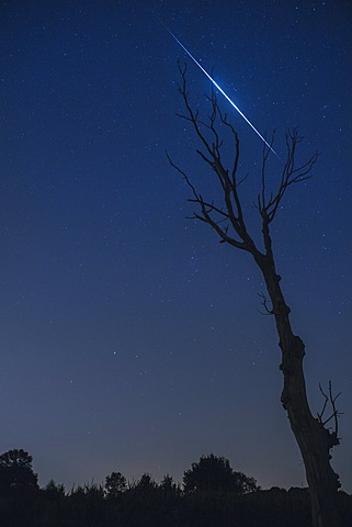Silhouette of a dead tree with a Perseids meteor burning up in the upper atmosphere in August 2013, North Brabant, The Netherlands (Holland), Europe  - 974-371