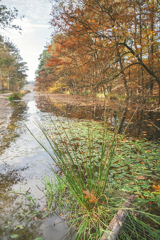 Canal running through the Mastbos forest in autumn, Breda, North Brabant, The Netherlands (Holland), Europe  - 974-380