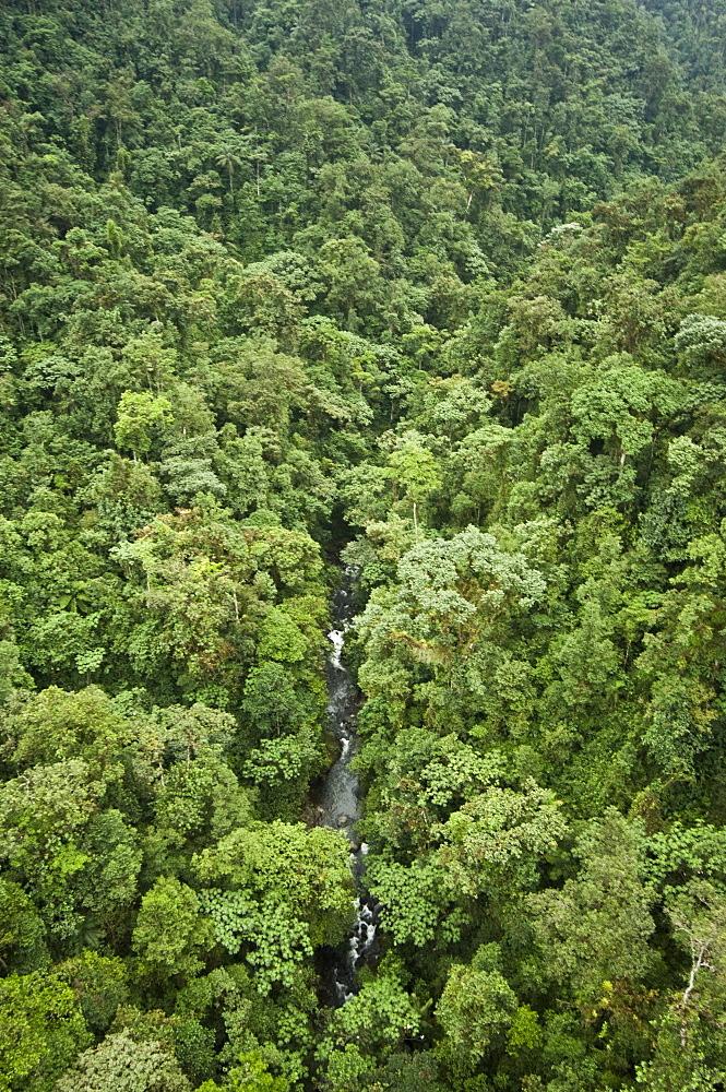 Cloud Forest. Mindo, Ecuador.