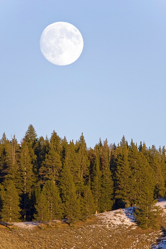 Full moon rising in Hayden Valley in Yellowstone National Park.in the late fall.