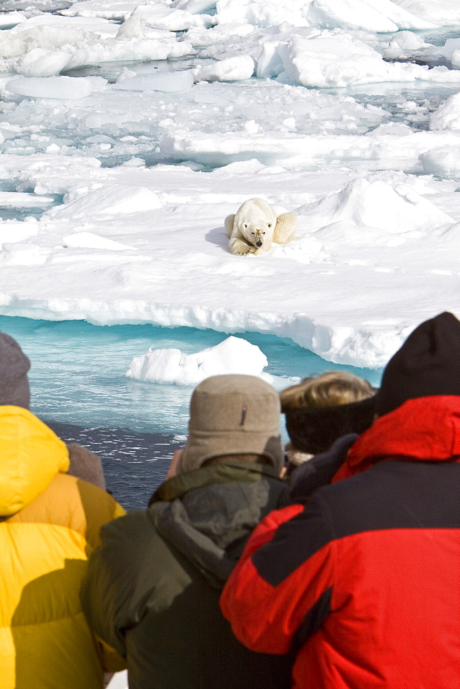 "A curious adult polar bear (Ursus maritimus) approaches the National Geographic Explorer in the Barents Sea off the eastern coast of Edgeøya (Edge Island) in the Svalbard Archipelago, Norway. The IUCN now lists global warming as the most significant threat to the polar bear, primarily because the melting of its sea ice habitat reduces its ability to find sufficient food. The IUCN states, ""If climatic trends continue polar bears may become extirpated from most of their range within 100 years."" On May 14, 2008, the United States Department of the Interior listed the polar bear as a threatened species under the Endangered Species Act."