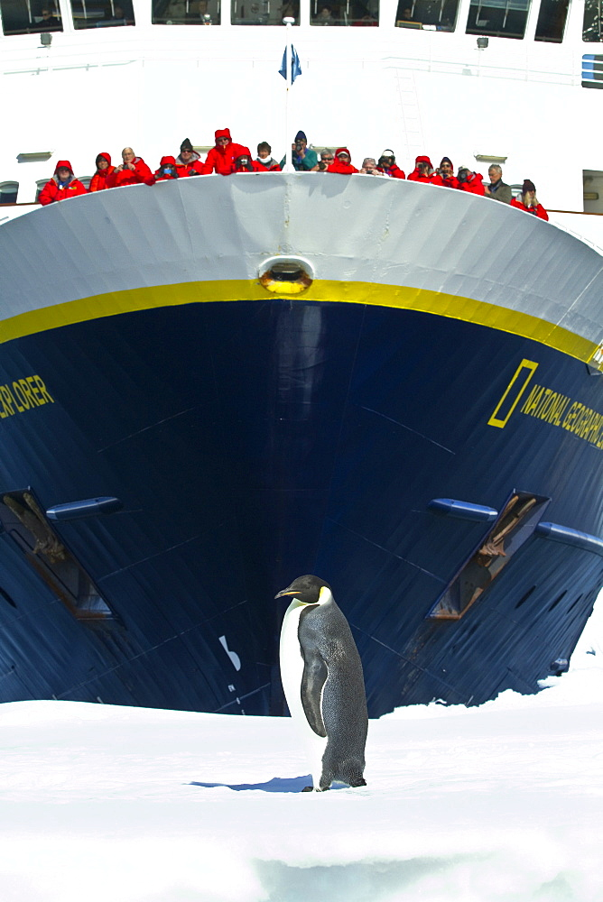 Lindblad Expeditions guests on board the National Geographic Explorer with a lone adult emperor penguin (Aptenodytes forsteri) on sea ice in the Gullet between Adelaide Island and the Antarctic Peninsula, Antarctica.