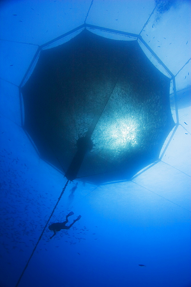 scuba diving worker and 3,000-cubic-meter submersible fish pen installed in open ocean just off Kona Coast to raise Kona Kampachi, Hawaiian yellowtail, aka almaco jack or kahala, Seriola rivoliana, Kona Blue Water Farms, Kailua Kona, Big Island, Hawaii, U