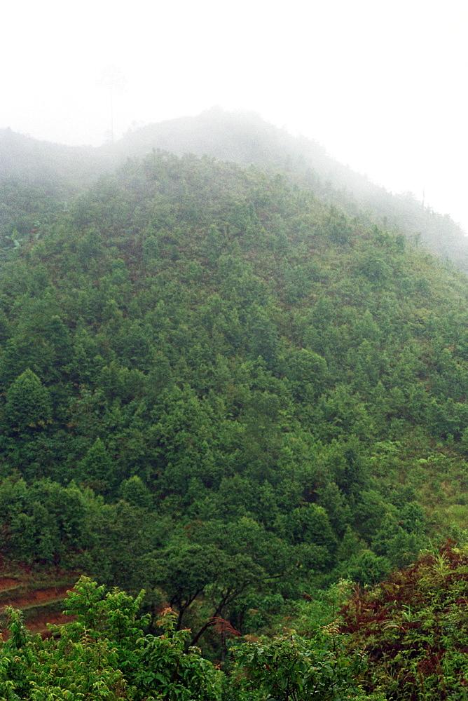 Forest Vietnam. - 986-112