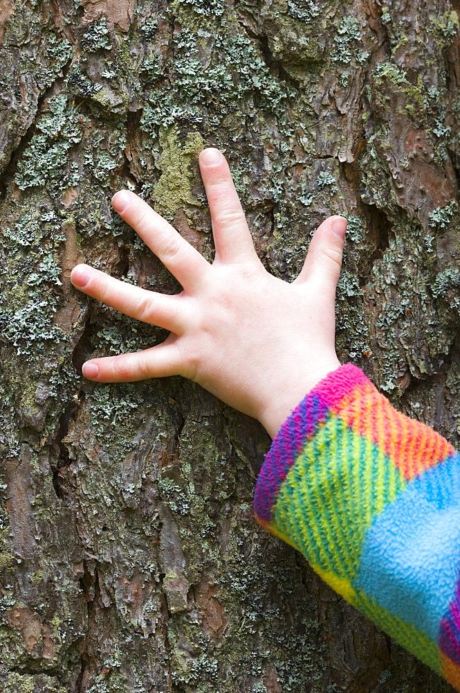 Child's hand feeling pine (Pinus)bark