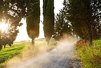 Dust on dirt Cypress tree lined road at sunset, Tuscany, Italy