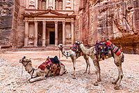 Exterior view of the rock-cut architecture of Al Khazneh or The Treasury at Petra, Jordan, camels in the foreground, Petra, Jordan
