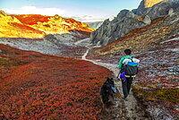 Female backpacker, backpacking with her dog on the Kesugi Ridge Trail in autumn, Denali State Park, Alaska, United States of America