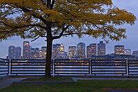 Tree in a park with buildings in the background, Lo Presti Park, Boston Harbor, Boston, Suffolk County, Massachusetts, USA