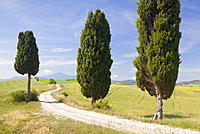 Tuscan landscape with cypress trees, near Pienza, Val d'Orcia (Orcia Valley), UNESCO World Heritage Site, Siena Province, Tuscany, Italy, Europe