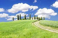 Farmhouse with cypress trees, near Pienza, Orcia Valley (Val d'Orcia), Siena region, Tuscany, Italy, Europe