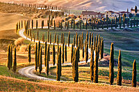 Tree-lined avenue with cypresses at sunset in Tuscany, Italy, Europe
