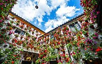 Many red geraniums in flower pots on the house wall, decorated inner courtyard, Fiesta de los Patios, Cordoba, Andalusia, Spain, Europe