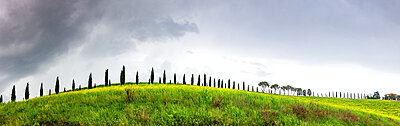 Green landscape with cypress trees and rolling hills, Tuscany, Italy, Europe