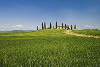 Countryside near Pienza, Val d'Orcia, Siena province, Tuscany, Italy, Europe
