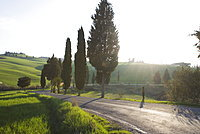 Road and cypresses near Pienza, Val D'Orcia, Tuscany, Italy, Europe