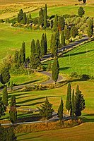 Cypress trees along road from Pienza to Montepulciano, Val d'Orcia, Orcia Valley, UNESCO World Heritage Site, Siena Province, Tuscany, Italy, Europe