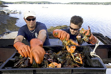 Preparing a traditional Maine lobster bake on Cabbage Island off the coast of Boothbay Harbor.