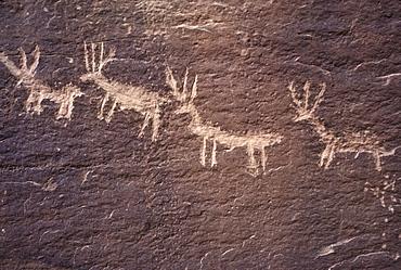 Historic petroglyphs (probably Navajo in origin) at Sand Island, near Bluff, Utah.