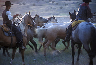 Cowboys round up horses as part of the Artist's Ride, an annual event held near Wall, South Dakota which features Old West actors and models posing for western painters and sculptors. The photos the artists take during this event provide visual material for their creations.