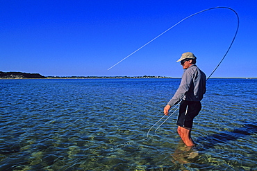 A salt water fly fisherman fights a striped bass in Chatham, Massachusetts.
