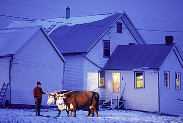 Farmer with ox and farmhouse in Lunenburg, Nova Scotia, Canada.