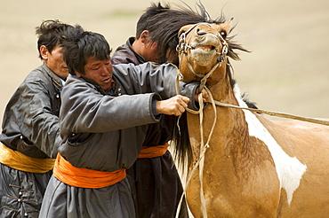 Gobi arats (cowboys), Gobi National Park, Mongolia