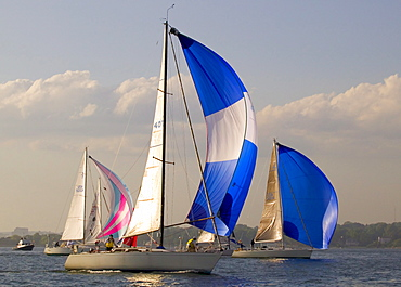 Sailboats with spinnakers flying maneuver for a starting position at the biginning of the Block Island Race.