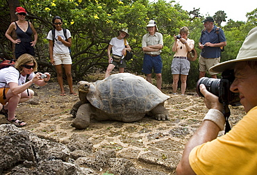 Tourists converge around a captive giant tortoise housed at the Darwin Research Station on Santa Cruz Island, Galapagos.