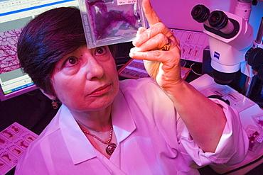 Bisphenol A researcher