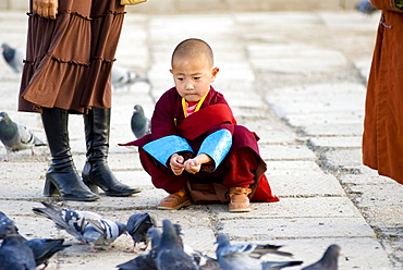 Young lama, Gandan Monastery, Ulaanbaatar, Mongolia
