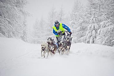Dogsled race in Jakuszyce, Poland.