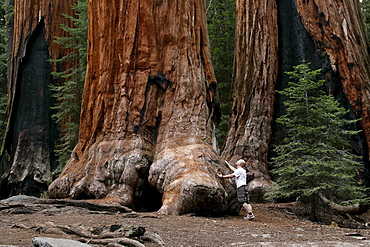 A male hiker next to a giant sequoia tree in Sequoia National Park.