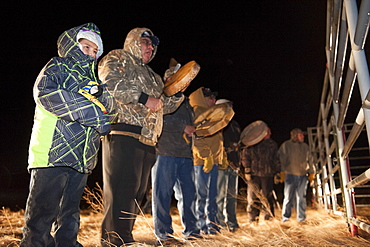 Tribal singers welcome the bison home. Yellowstone bison are unloaded to a pasture on the Ft. Peck Indian reservation.  The frst time in history Yellowstone bison have returned to the tribes.