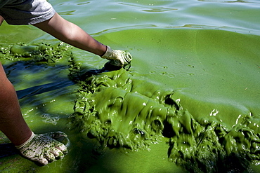 A water quality researcher samples Toxic Blue Green Algae in the Copco Reservoir in Northern California.