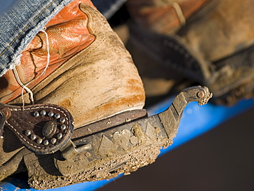Boots with spurs of a rodeo cowboy at work.