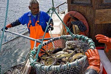 A small commercial boat fishes for cod near Qaqortoq, Greenland.