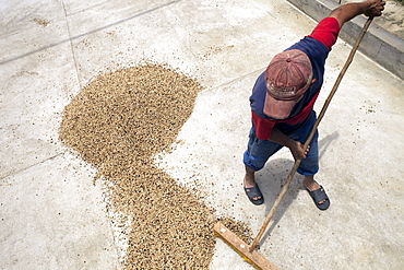 A worker spreads coffee beans out to dry near Socorro, Colombia.