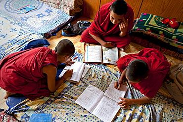 Young monks doing their homework, Likir Monastery, Ladakh, India.