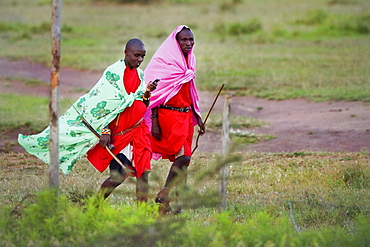 Masai tribesman walk and talk on Cellphone