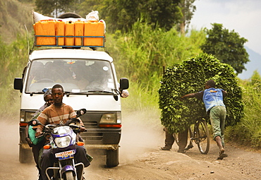 Cassava leaves brought to market by bicycle