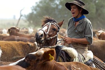 Gauchos work with cattle at Estancia Ibera, Esteros del Ibera, Corrientes Province, Argentina