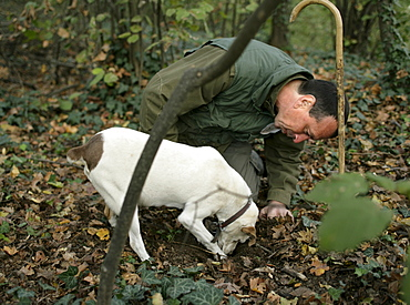 Giovanni Monchiero and his dog search for white and black truffles in Roddi, Piedmont, Italy.