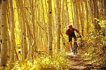 Man fall mountain biking in Park City, Utah.